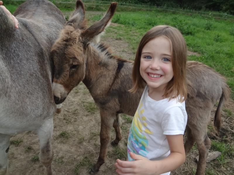 Animals donkey fun